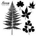 Fern Branch, Oxalis leaf, Wild Grape Leaves Royalty Free Stock Photo