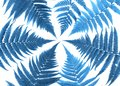 Fern branches pattern isolated on white background. Clasic blue color of year Royalty Free Stock Photo