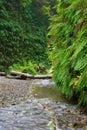 Fern Canyon Royalty Free Stock Photo