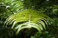 Fern close up of a in a rain forest Royalty Free Stock Image