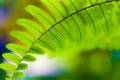 Fern closeup leaves environment concept Royalty Free Stock Photo