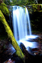 Fern Falls. Royalty Free Stock Photo