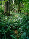 Fern in forest Stock Image