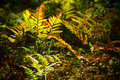 Fern in forest abstract nature background Stock Photography