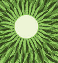 Fern Frame Background Royalty Free Stock Photo