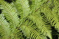 Fern frond close up of a Royalty Free Stock Images