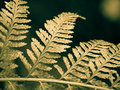 Fern frond closeup Royalty Free Stock Photo