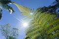 Fern frond green against blue sky Royalty Free Stock Photo