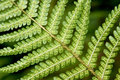 Fern fronds close up of Royalty Free Stock Photos