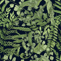 Fern green foliage on black background. Hand drawn seamless pattern with realistic plants. Colorful vector illustration.