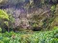 Fern Grotto , Kauai Royalty Free Stock Photo