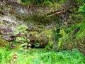 Fern Grotto, Wailua State Park, Kauai, Hawaii Royalty Free Stock Photo