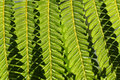 Fern in hawai big island hawaii Royalty Free Stock Photo