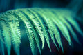 Fern in jungle a a dark Royalty Free Stock Image