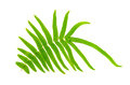 Fern leaf close up Stock Images