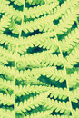 Fern leaf close up bright green branch Stock Photography