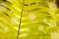 Fern leaf detail fresh green of Stock Photo
