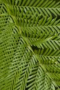 Fern leaf filling the frame Stock Photos