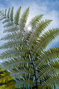 Fern Leaf (format de portrait) Images stock
