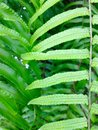 Fern leaf ground detail close up of with natural blur background Stock Photos