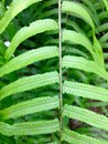 Fern leaf ground detail close up of with natural blur background Stock Images