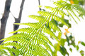 Fern leaf low angle view of Royalty Free Stock Photography