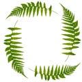 Fern Leaf Symbol Royalty Free Stock Photo