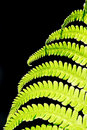 Fern leave Stock Photography