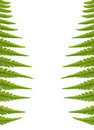 Fern leaves background, isolated on white Stock Photography