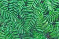 Fern leaves close up of natural green fern leaf with water droplets Royalty Free Stock Photo