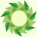 Fern leaves frame with room for your text Royalty Free Stock Images