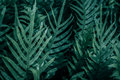 Fern leaves in the garden Royalty Free Stock Photo