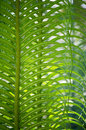 Fern leaves with sun back light Stock Images