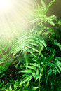 Fern leaves sunshine Royalty Free Stock Image