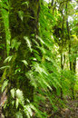 Fern leaves and trees in the forest primeval green of Stock Photos
