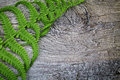 Fern leaves on a wooden background Royalty Free Stock Photos
