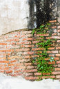 Fern living on bricks wall Royalty Free Stock Photo