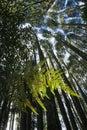 Papraď v domáci les