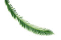 Fern Palm Royalty Free Stock Images