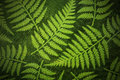 Fern paper background Stock Photo