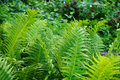 fern plant texture Royalty Free Stock Photo