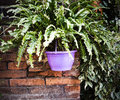 A fern in a pot Royalty Free Stock Photo