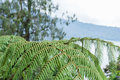 A fern in rain forest on the tropical magic island Bali, Indonesia. Royalty Free Stock Photo
