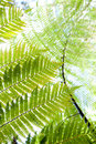 Fern - Rangitoto Island New Zealand Royalty Free Stock Image