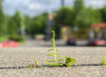 Fern sprout breaks through the granite on cityscape background Stock Photo
