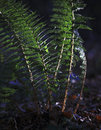 Fern in sun beautiful light up deep forest Royalty Free Stock Photos