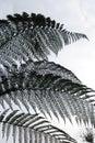Fern tree detail