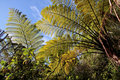 Fern trees in the Abel Tasman National Park Stock Image
