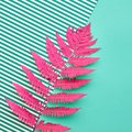 Fern Tropical Leaf. Floral Summer Fashion. Minimal Royalty Free Stock Photo