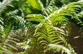 Fern in wild life Royalty Free Stock Photo